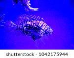 zebrafish   firefish  tastyfish ... | Shutterstock . vector #1042175944