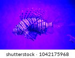 zebrafish   firefish  tastyfish ... | Shutterstock . vector #1042175968