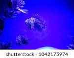 zebrafish   firefish  tastyfish ... | Shutterstock . vector #1042175974