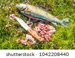 bloody knife lie on green grass ... | Shutterstock . vector #1042208440
