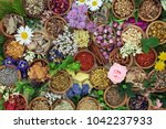 herbal medicine with herbs and... | Shutterstock . vector #1042237933