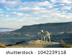 dog contemplating the amazing... | Shutterstock . vector #1042239118
