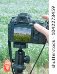 young male photographer taking... | Shutterstock . vector #1042273459