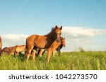 horse foal on pasture | Shutterstock . vector #1042273570