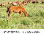 horse foal on pasture | Shutterstock . vector #1042273588