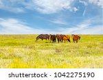 a herd of wild horses shown on... | Shutterstock . vector #1042275190