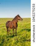 the wild horse  equus ferus  in ... | Shutterstock . vector #1042275253