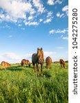 a herd of wild horses shown on... | Shutterstock . vector #1042275280
