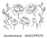 peony flower and leaves drawing.... | Shutterstock .eps vector #1042299070