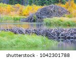 the north american beaver or...   Shutterstock . vector #1042301788