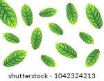 green leaf on white background.   Shutterstock . vector #1042324213