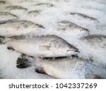 close up of fresh fishes giant... | Shutterstock . vector #1042337269