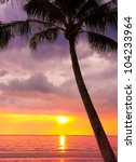 Stock photo coconut horizon fiery backdrop 104233964