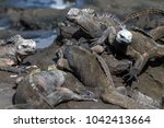 a group of galapagos marine... | Shutterstock . vector #1042413664