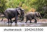 elephant family having a drink... | Shutterstock . vector #1042415500