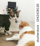 Small photo of Cute cats couple