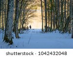 forest and nature near lake... | Shutterstock . vector #1042432048