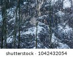 forest and nature near lake... | Shutterstock . vector #1042432054