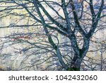 forest and nature near lake... | Shutterstock . vector #1042432060