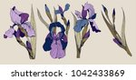 Iris Flowers Vector Clip Art...
