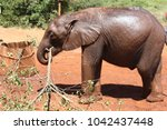 Young Elephant With Tree Branch
