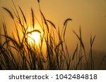 sunrise  lighting in the... | Shutterstock . vector #1042484818