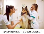 smiling veterinarian team with... | Shutterstock . vector #1042500553