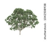 tree isolated on white... | Shutterstock . vector #1042508938