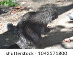 cute porcupine standing on its... | Shutterstock . vector #1042571800