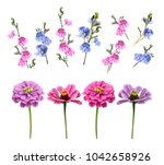 isolated buds and flowers in a... | Shutterstock . vector #1042658926