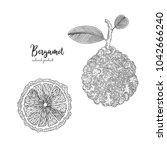 hand drawn illustrations of... | Shutterstock .eps vector #1042666240