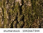 The Moss On The Tree. Texture ...