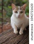 close up of cute cat. | Shutterstock . vector #1042721620