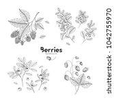 vector hand drawn set of... | Shutterstock .eps vector #1042755970