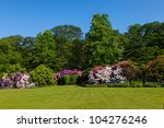 Rhododendron Azalea Bushes And...