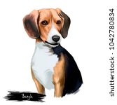 beagle small scent hound breed... | Shutterstock . vector #1042780834