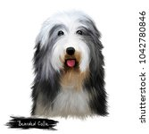 Bearded Collie Or Beardie...