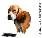 beagle harrier scent hound... | Shutterstock . vector #1042780858