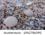 shells at sai keaw beach in... | Shutterstock . vector #1042786390