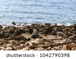 coast of the mediterranean sea... | Shutterstock . vector #1042790398