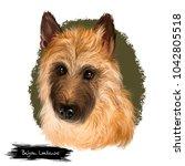 belgian laekenois  belgian... | Shutterstock . vector #1042805518