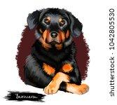 beauceron  berger de beauce or... | Shutterstock . vector #1042805530