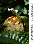 orchid in a garden | Shutterstock . vector #1042810660