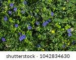 Sky Blue Little Flowers...