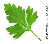 parsley | Shutterstock . vector #104285528
