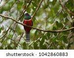 portrait of collared trogon ...   Shutterstock . vector #1042860883