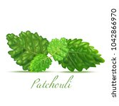 patchouli leaves. realistic... | Shutterstock .eps vector #1042866970