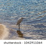 a beautiful graceful white...   Shutterstock . vector #1042911064