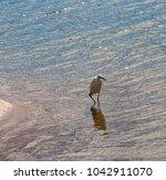 a beautiful graceful white...   Shutterstock . vector #1042911070