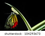 monarch butterfly  milkweed... | Shutterstock . vector #104293673